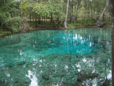 ginnie-springs-basin1