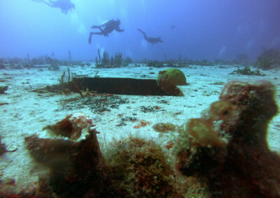 Sea life at the wreck